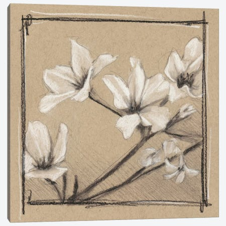 White Floral Study I Canvas Print #EHA257} by Ethan Harper Canvas Art
