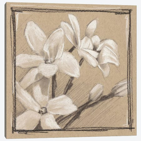White Floral Study III Canvas Print #EHA259} by Ethan Harper Canvas Print