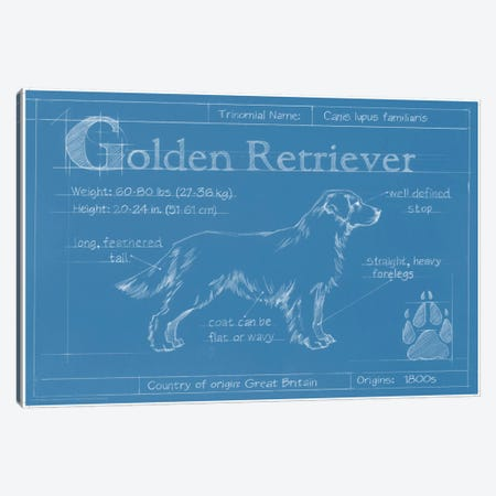 Blueprint Of A Golden Retriever Canvas Print #EHA25} by Ethan Harper Canvas Art