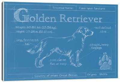 Blueprint Of A Golden Retriever Canvas Art Print