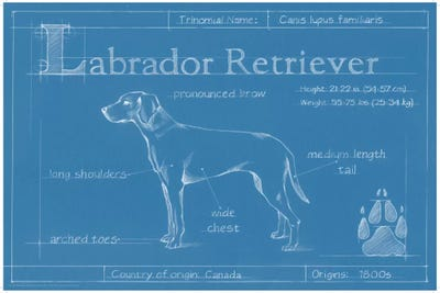Blueprint of a labrador retriever art print by ethan harper icanvas framed canvas malvernweather Image collections