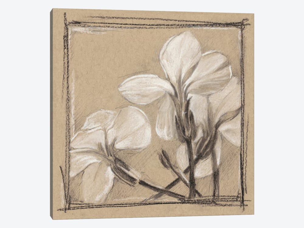 White Floral Study IV by Ethan Harper 1-piece Canvas Artwork