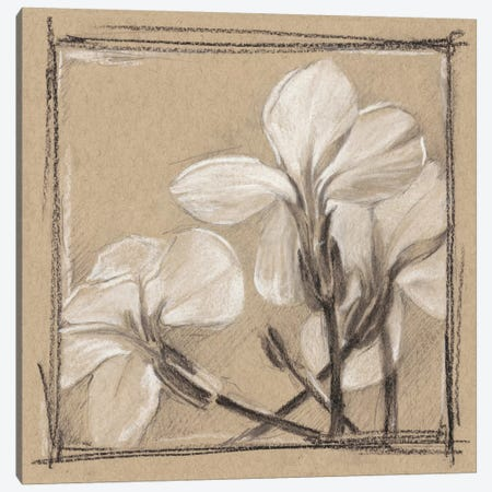 White Floral Study IV Canvas Print #EHA260} by Ethan Harper Canvas Art