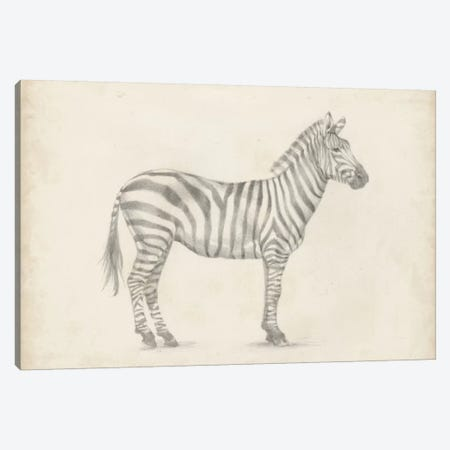 Zebra Sketch Canvas Print #EHA261} by Ethan Harper Canvas Artwork