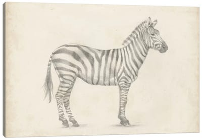 Zebra Sketch Canvas Art Print