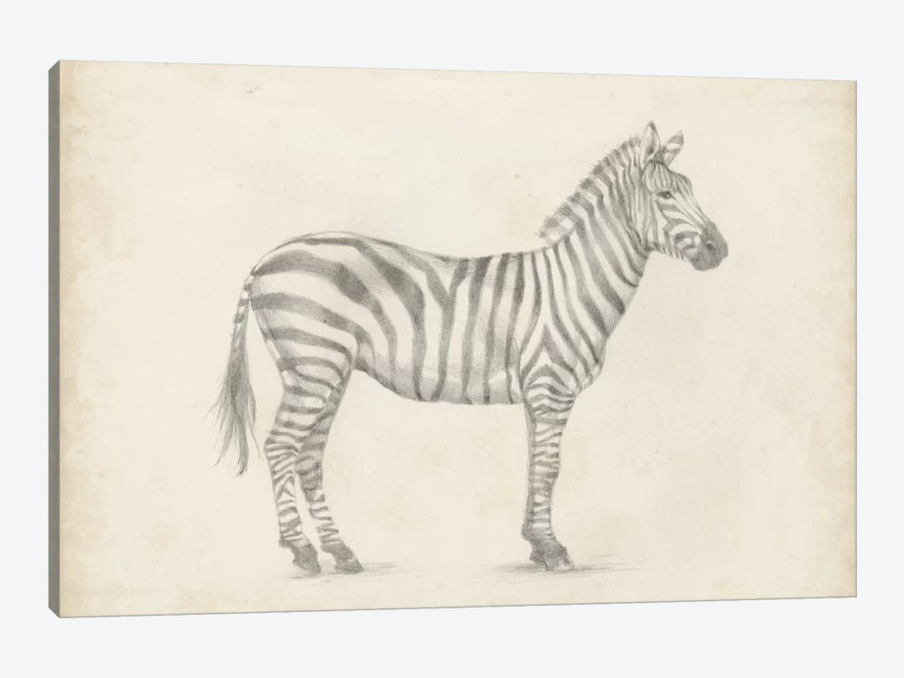 Zebra Sketch by Ethan Harper 1-piece Art Print