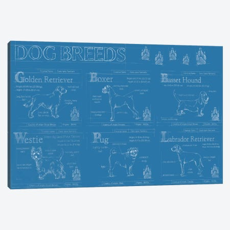 Dog Breeds Infograph Canvas Print #EHA266} by Ethan Harper Canvas Print