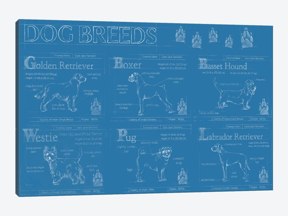 Dog Breeds Infograph by Ethan Harper 1-piece Canvas Art