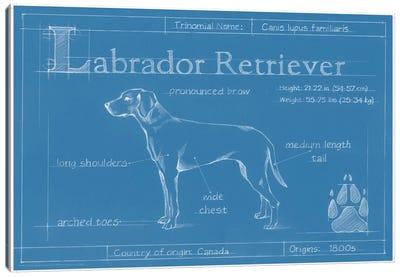 Blueprint Of A Labrador Retriever Canvas Print #EHA26