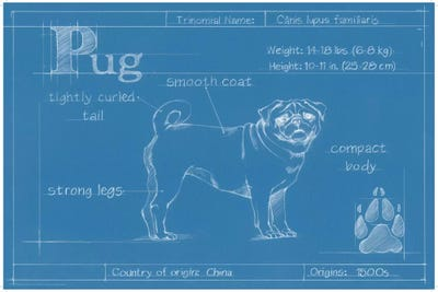 Blueprint of a pug canvas wall art by ethan harper icanvas framed canvas malvernweather Image collections