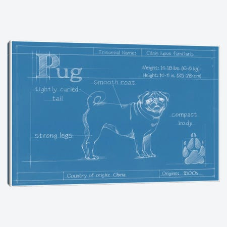 Blueprint Of A Pug Canvas Print #EHA27} by Ethan Harper Canvas Art