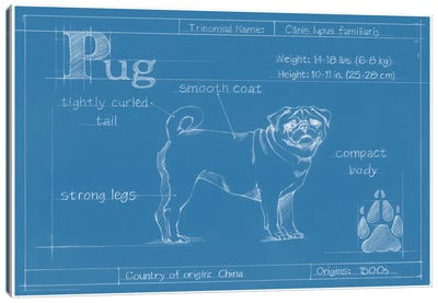 Blueprint Of A Pug Canvas Art Print