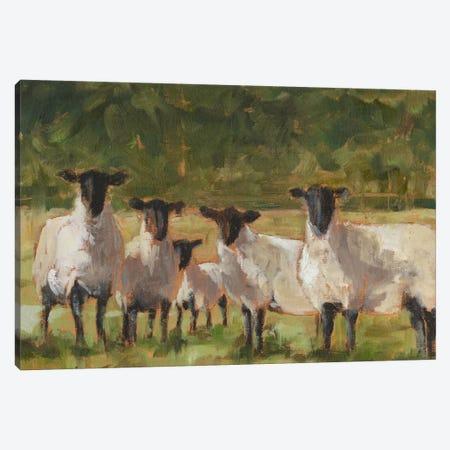 Sheep Family II Canvas Print #EHA283} by Ethan Harper Canvas Artwork