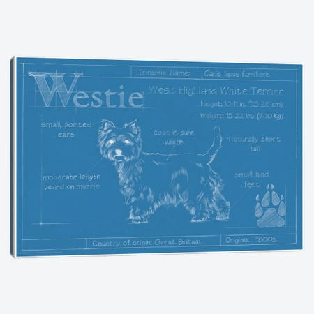 Blueprint Of A Westie Canvas Print #EHA28} by Ethan Harper Canvas Art Print