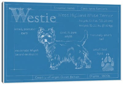 Blueprint Of A Westie Canvas Art Print