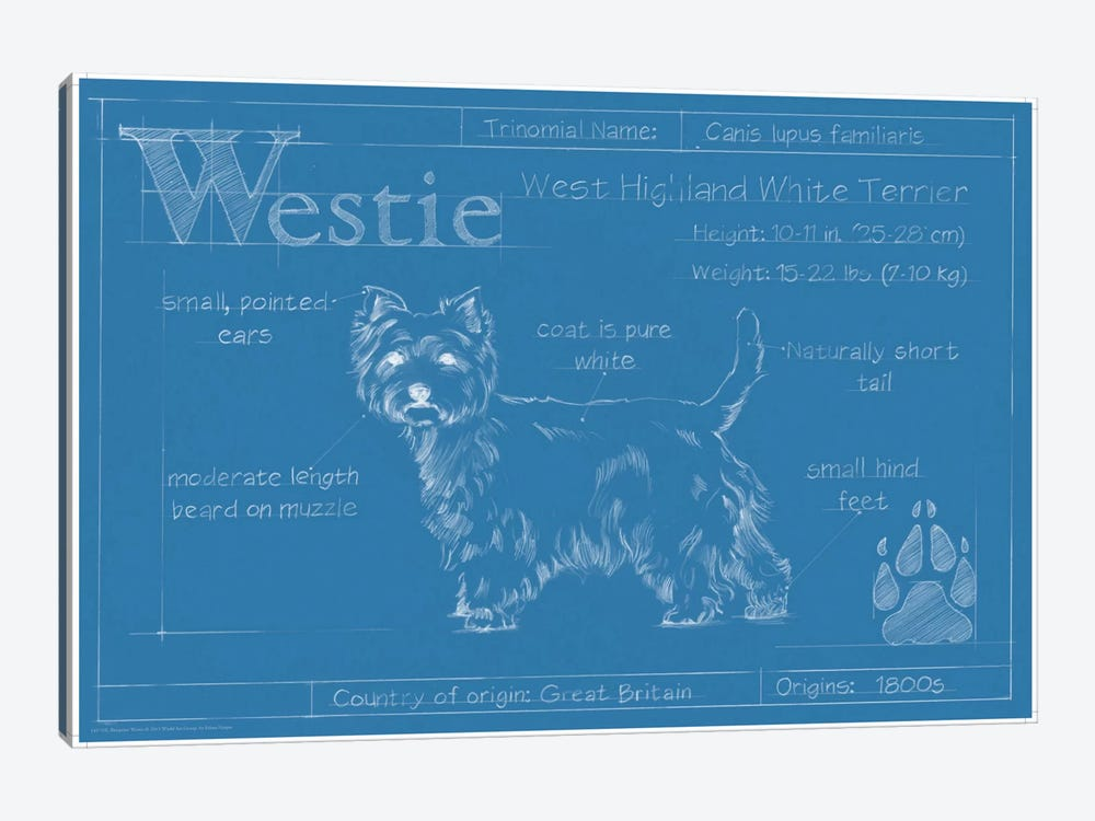 Blueprint Of A Westie by Ethan Harper 1-piece Canvas Wall Art