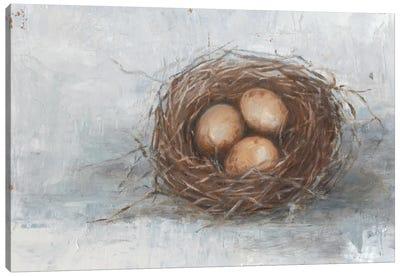 Rustic Bird Nest II Canvas Art Print