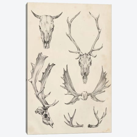 Skull & Antler Study II Canvas Print #EHA379} by Ethan Harper Canvas Artwork