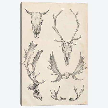 Skull & Antler Study II Canvas Print #EHA379} by Ethan Harper Canvas Artwork