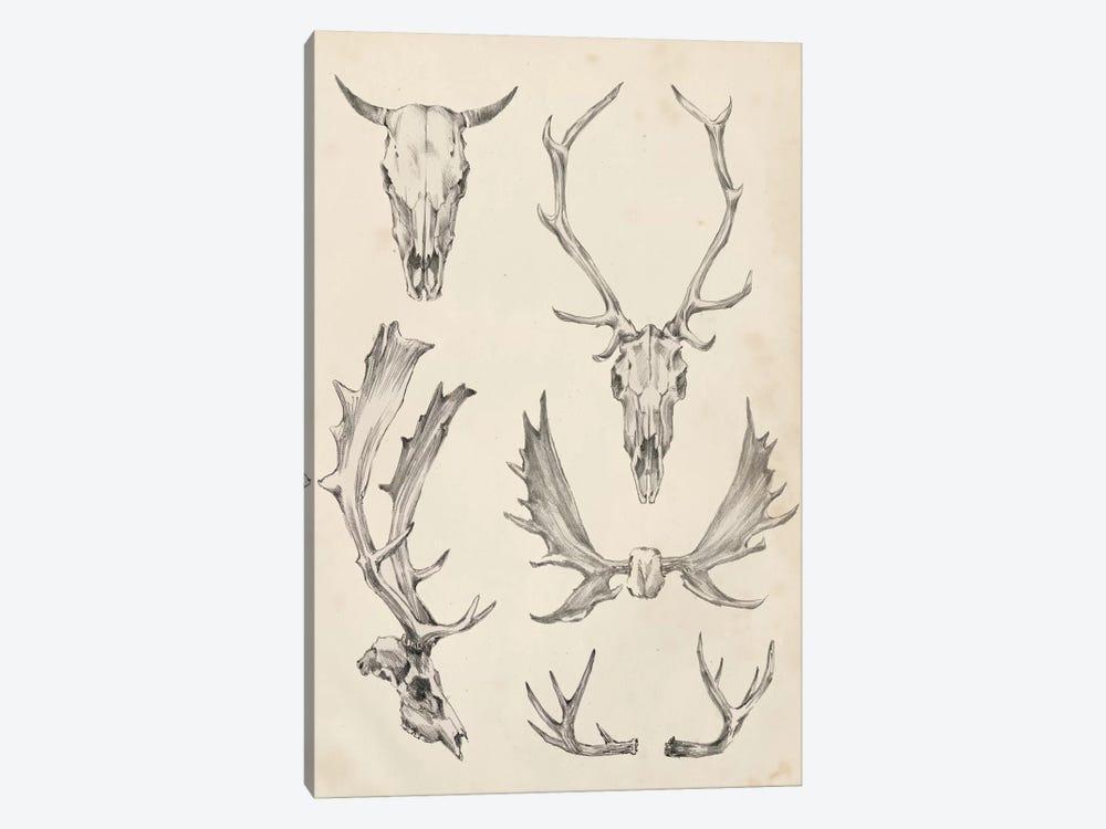 Skull & Antler Study II by Ethan Harper 1-piece Canvas Print