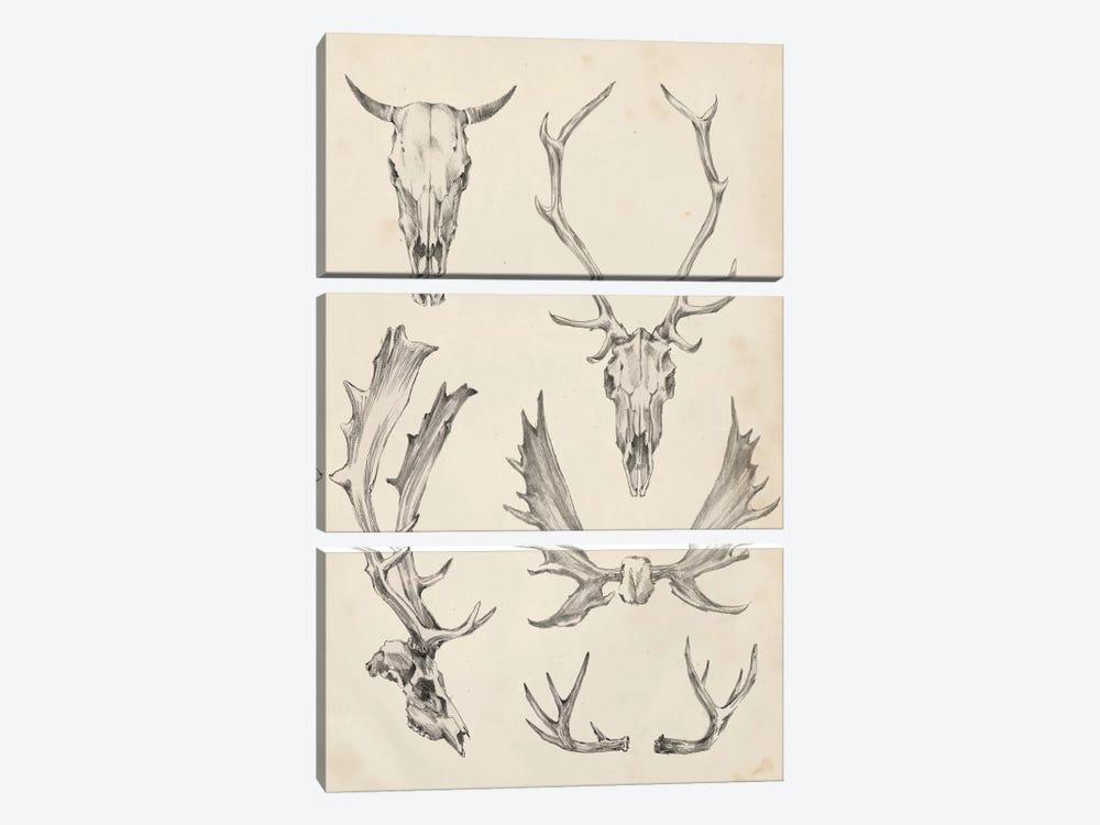 Skull & Antler Study II by Ethan Harper 3-piece Art Print