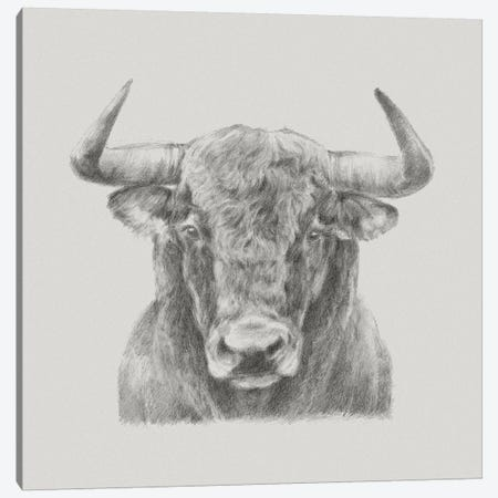 Black & White Bull Canvas Print #EHA394} by Ethan Harper Art Print