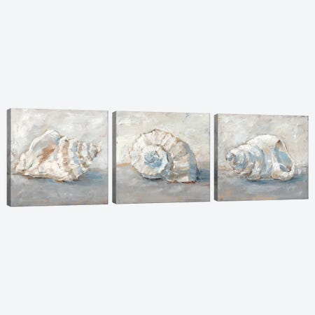 Blue Shell Study Triptych Canvas Print Set #EHA3HSET004} by Ethan Harper Canvas Art Print