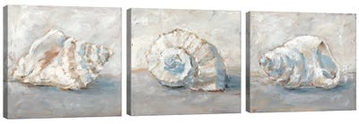 Blue Shell Study Triptych Canvas Art Print