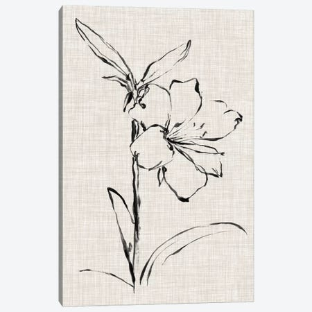 Floral Ink Study I Canvas Print #EHA412} by Ethan Harper Canvas Print