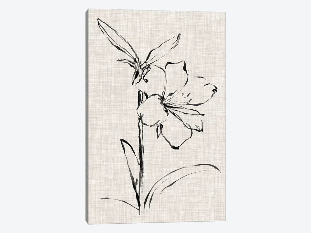 Floral Ink Study I by Ethan Harper 1-piece Canvas Art Print