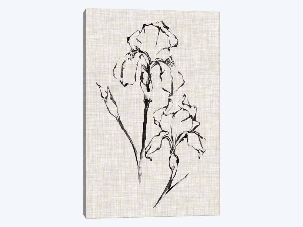 Floral Ink Study II by Ethan Harper 1-piece Canvas Artwork