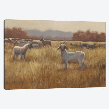 Grazing Goats I Canvas Print #EHA416} by Ethan Harper Canvas Artwork