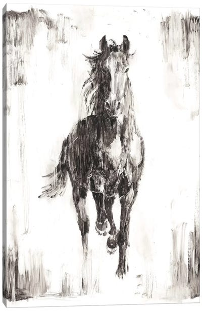 Rustic Black Stallion I Canvas Art Print
