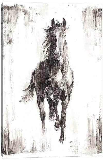 Rustic Black Stallion I Canvas Art Print