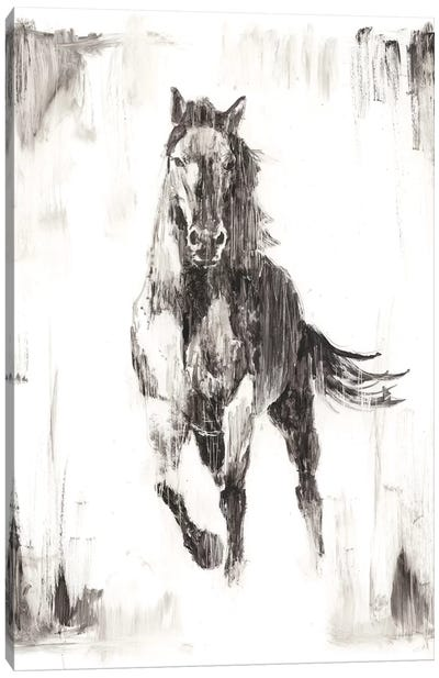 Rustic Black Stallion II Canvas Art Print