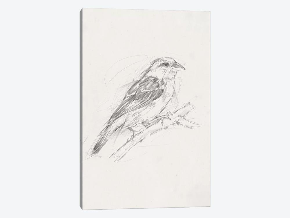 Avian Study  II by Ethan Harper 1-piece Canvas Art