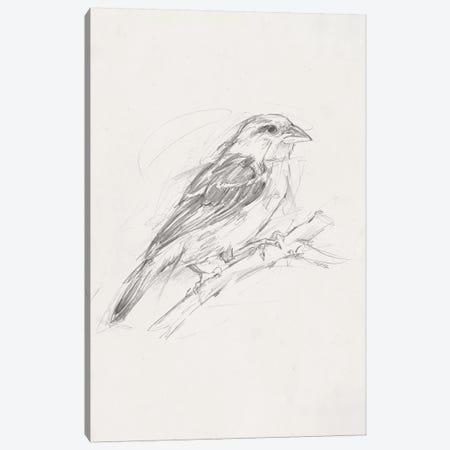 Avian Study  II Canvas Print #EHA462} by Ethan Harper Canvas Wall Art