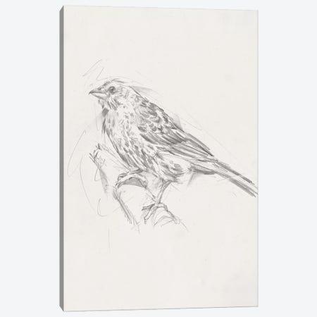 Avian Study  III Canvas Print #EHA463} by Ethan Harper Canvas Artwork
