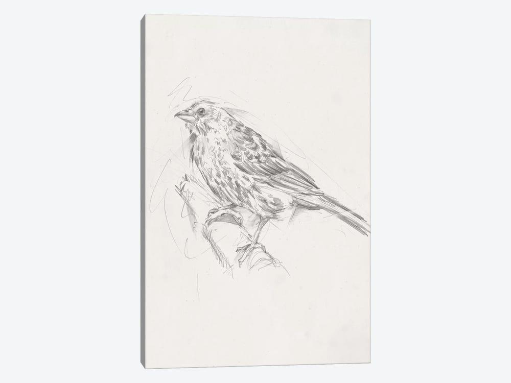 Avian Study  III by Ethan Harper 1-piece Art Print