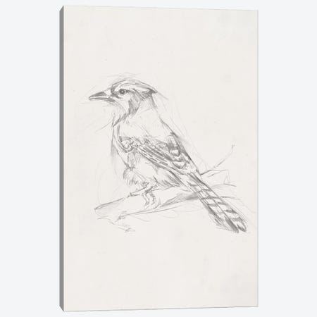Avian Study  IV Canvas Print #EHA464} by Ethan Harper Art Print