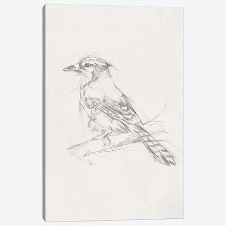 Avian Study  IV Canvas Print #EHA464} by Ethan Harper Art Print