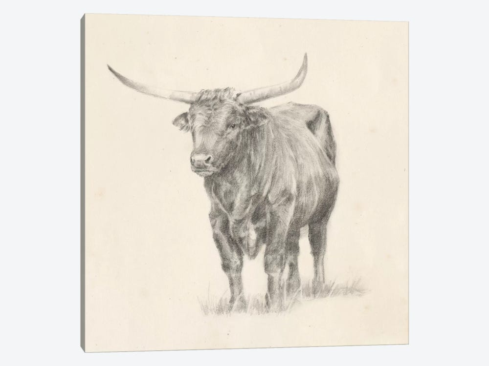 Longhorn Steer Sketch I by Ethan Harper 1-piece Canvas Art Print