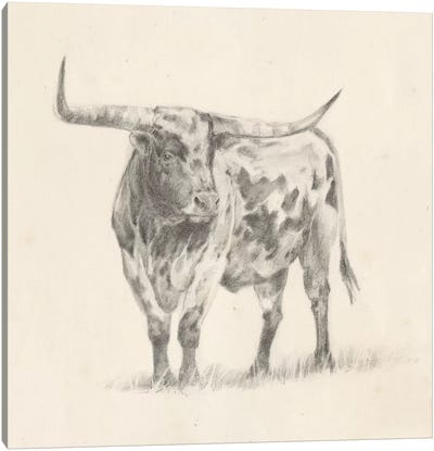 Longhorn Steer Sketch II Canvas Art Print