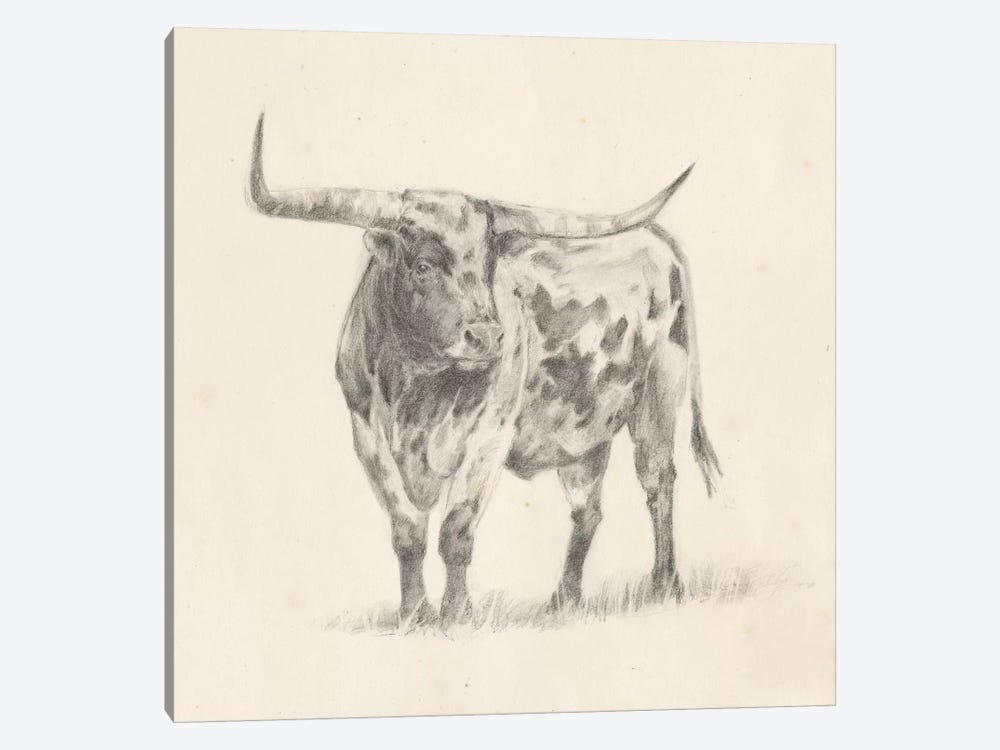Longhorn Steer Sketch II by Ethan Harper 1-piece Canvas Wall Art