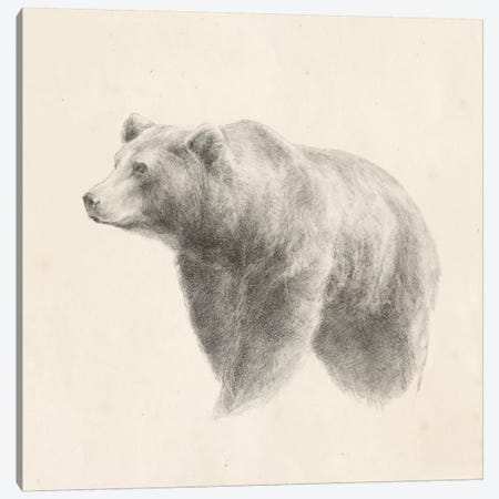 Western Bear Study Canvas Print #EHA519} by Ethan Harper Canvas Art