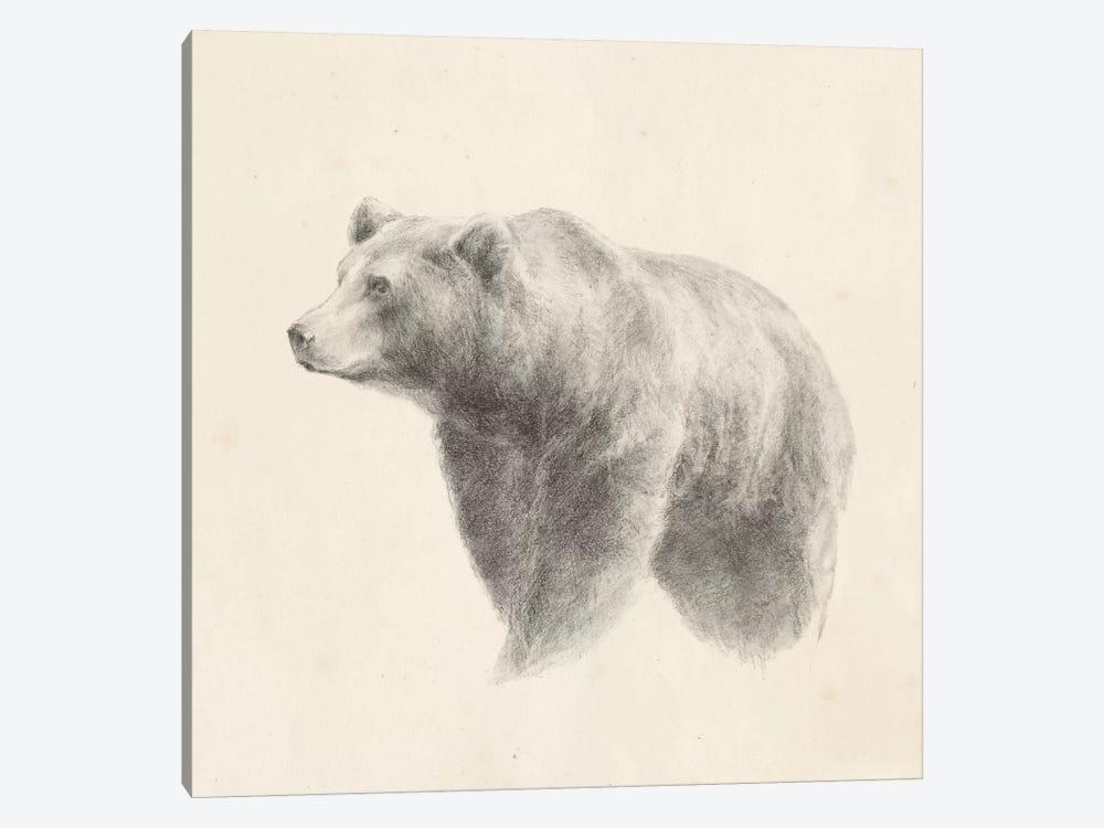 Western Bear Study by Ethan Harper 1-piece Canvas Print