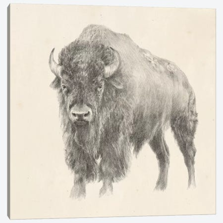 Western Bison Study 3-Piece Canvas #EHA520} by Ethan Harper Canvas Print