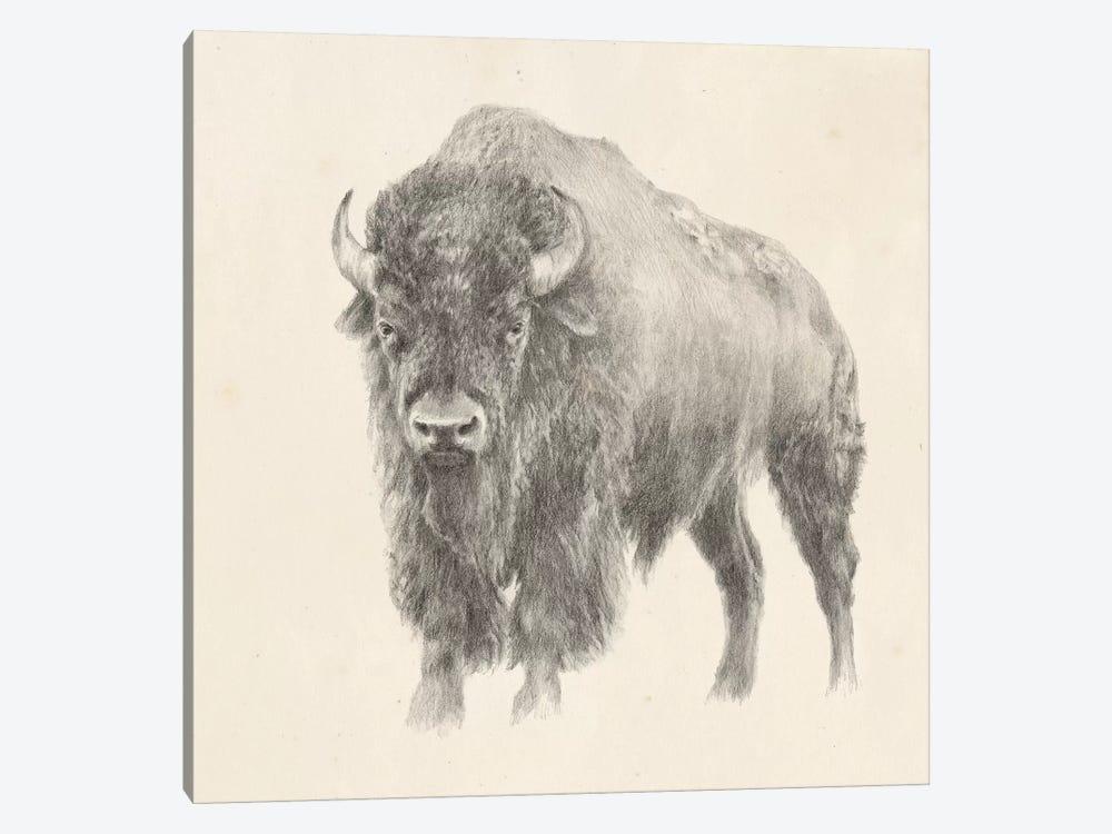Western Bison Study by Ethan Harper 1-piece Art Print