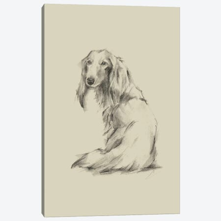 Puppy Dog Eyes II Canvas Print #EHA549} by Ethan Harper Canvas Print