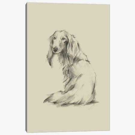 Puppy Dog Eyes II 3-Piece Canvas #EHA549} by Ethan Harper Canvas Print